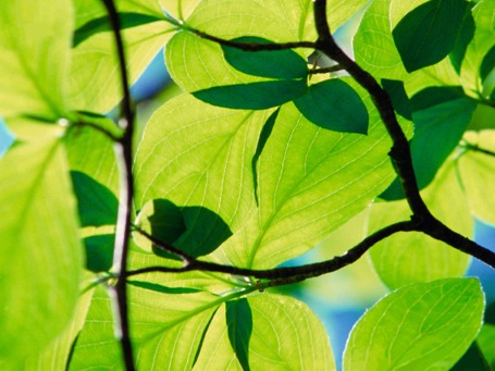 winhec-leaf